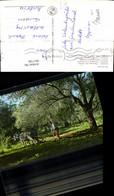 601739,Greece Griechenland Pflügenend Unter Olivenbäume Pflug Esel Bauer Landwirtscha - Bauern