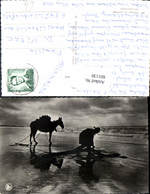 601130,Pecheur De Crevettes Garnalenvisser Garnelenfischer Fischer Esel Pferd Fischer - Fischerei