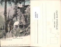 601107,Hirte Ziege Ziegenhüter Auf Der Alp Chevrier Dans Les Alpes Pub Fraternite Neu - Berufe