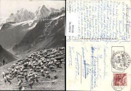 601104,Hirte Schäfer Aus Dem Lande Der 100 Alpentäler Schafe - Berufe