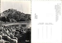 601103,Hirte Schäfer Causse Du Larzac Le Caylar Herault Les Moutons Du Village Von Ts - Berufe