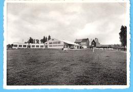Oudenaarde-Audenarde-+/-1960-Midd.Landbouwschool-Schoolhoeve (School Hoeve)-Achterzijde-Koe-vache - Oudenaarde