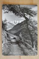 Höhenweg Mit Piz Palü Poschiavo Pontresina Schweiz - GR Graubünden