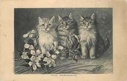 Chats - Gatti