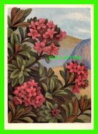 FLOWERS, FLEURS - ERICACEAE, RHODODENDRON FERRUGINEUM - ÉCRITE - - Fleurs