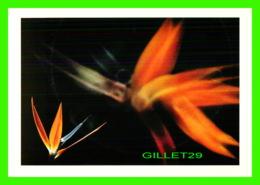 FLEURS - DENNIS STOCK /MAGNUM - DU LIVRE FLOWER SHOW - ÉDITIONS MARION-VALENTINE - - Fleurs