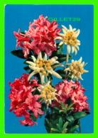 FLEURS - WORLD WIDE SALES AGENCIES LTD - TRAVEL IN 1986 - - Fleurs