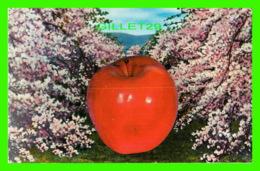 ADVERTISING, PUBLICITÉ - APPLE ORCHARD, POMMERAIE - WORLD WIDE SALES AGENCIES LTD - - Publicité