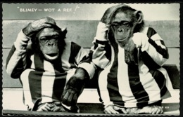 Ref 1278 - Real Photo Postcard - Comic Humour - Chimps In Football Shirts - Monkeys