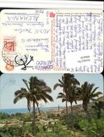 496639,Mexico Jalisco Panorama De Puerto Vallarta Teilansicht Palmen - Mexiko