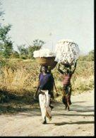 Cameroun : Au Nord, Le Temps Des Cultures - On Raméne Le Coton Chez Soi - Cameroun