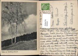 602620,Baum Birken I. Frühlingsschmuck Birke - Botanik