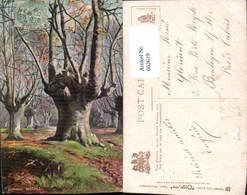 602619,Künstler Ak Burnham Beeches Baum Wald Pub Raphael Tuck Sons 6219 - Botanik
