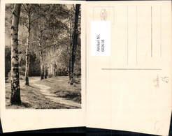 602618,Foto Ak Birke Birken Allee Baum - Botanik