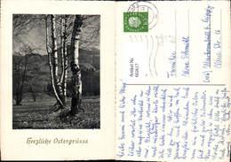 602617,Birke Birken Baum Ostern Passepartout - Ohne Zuordnung