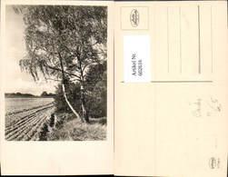 602616,Foto Ak Birke Baum Landschaft - Ohne Zuordnung