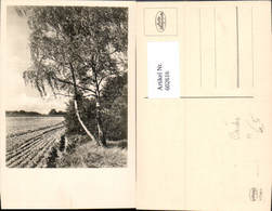 602616,Foto Ak Birke Baum Landschaft - Botanik