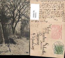 602615,Baum Bäume Wald Winteransicht Ak Nach Missinoär Schaller Pupping Eferding - Botanik