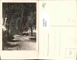 602614,Foto Ak Allee Bäume Baum - Ohne Zuordnung