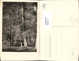 602613,Foto Ak Wald Bäume Baum - Ohne Zuordnung