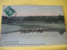 L13 9819 - CPA 1907- 40 UN COIN DES LANDES. BERGER FAISANT DESALTERER SON TROUPEAU DANS LA GRAND'LANDE. - France