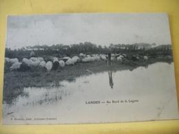 L13 9837 - CLICHE PLUS RARE. CPA - 40 LANDES. AU BORD DE LA LAGUNE - JEUNE BERGER ET SON TROUPEAU DE MOUTONS. - France