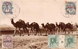 Algérie / 10398 - Une Caravane - Belles Oblitérations - Algérie