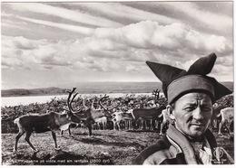 Norge, Fjellsame Pa Vidda Med Sin Renflokk (3500 Dyr) - (Norge/Norway) - Mountain Lapp & Reindeer Flock - Noorwegen