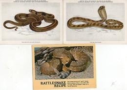 3 Cartes De Serpent - Animaux & Faune