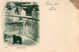 Suisse. CPA. Gruss Aus Bern. La Fosse Aux Ours. Bärengraben. - Ours