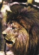 Lion , Löwe, Leon Unused - Lions