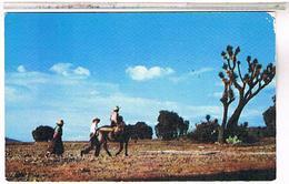 MEXIQUE  HOMEWARD BOUND US140 - Mexique