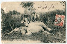 CAMBODGE - INDOCHINE : Chasse -  Eléphant Tué Dans La Jungle - Cambodge
