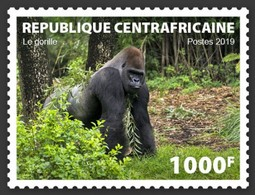 Centrafrica 2019, Animals, Gorilla, 1val - Gorilles