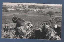 21 Monthélie Vue Des Duresses - CP ANIMEE  EN BOURGOGNE - LES VENDANGES - PHOTO COLLIN à TANNAY 58 N° 1482 - Meursault