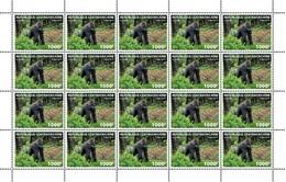 Centrafrica 2019, Animals, Gorilla, Sheetlet - Gorilles