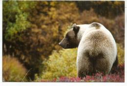 Ours Grizzly Américain, Carte Postale USA Envoyée Andorra, Avec Timbre à Date Arrivée. Deux Photos - Ours