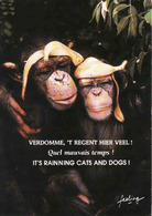 Monkey, Singe, Used - Singes