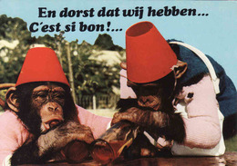 Monkey, Singe, Affe, Jardin Zoologique De Gue Gallet, Sigy Le Chatel, ZOO, Used - Singes