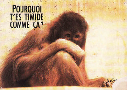 Monkey, Singe, Affe,  Unused - Singes