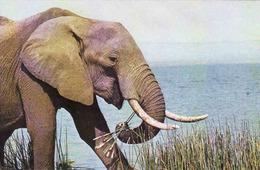 Elephant, Elefant, Used - Éléphants