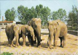 Elephant, Indischer Und Afrikanischer Elephant, Elefant, Used - Éléphants