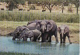 Elephant,  Elephant, Elefant, Used - Éléphants