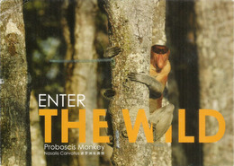 Proboscis Monkey, Sabah, Malaysia, Postcard Borneo Sent To Andorra, With Arrival Postmark - Singes