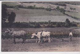 Cpa -agri-camp-laboureurs-attelage Mixte Cheval / Boeuf-edi E.L.D. - Cultures