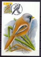 Belgie - 2019 - OBP - Max. Kaart  ** Baardmannetje  - Vogels - A.Buzin ** - Maximum Cards