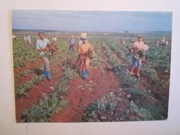 Cuba Laescuela Al Campo Agriculture - Cartes Postales