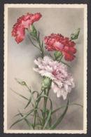 93411/ FLEURS, Illustration, Oeillets - Bloemen