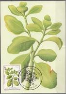 716 S. Tomé E Principe 1983 Medicinal Plants Maximum Card Bryophillum Pinatum Piante Medicinali Maxi - Sao Tomé E Principe