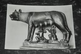 5536   ROMA, MUSEI CAPITOLINI, LA LUPA - Musei